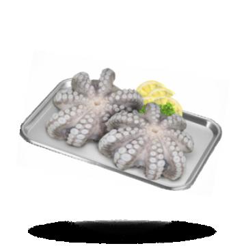 Octopus bloem