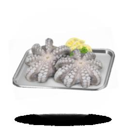 Octopus bloem T4, diepvries